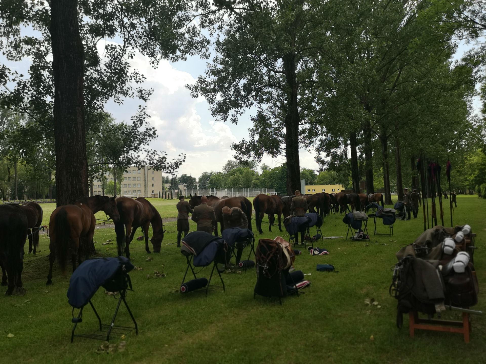 W cieniu drzew oporządzane jest liczne stado koni. Na pierwszym planie stojaki z ekwipunkiem jeździeckim oraz wyposażenie żołnierzy.